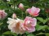 english_elegance_austin_1986_4523