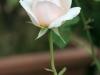 english_garden_gluecksburg_4273
