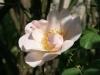 shropshire_less_austin_1968_4607