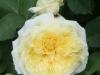 The Pilgrim® Syn. Gartenarchitekt G. Schulze®, Austin 1991_4549