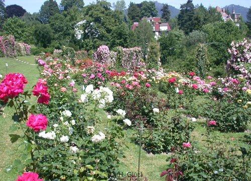 Blick über den Rosengarten auf dem Beutig