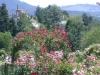 Blick über den Rosengarten in Baden-Baden