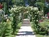 Rosenbogen im Rosenneuheitengarten