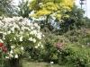 Rosen in alle Farben und berauschender Duft
