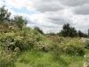 Der Rosenhang in Klein-Karben