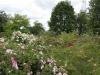 Blick auf den Rosenhang in Klein-Karben