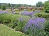 Lavendel im Rosengarten, auf der Rosenhöhe, Darmstadt