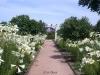 Weg zum Rosendom mit Lilien. Der Rosengarten, Park Rosenhöhe, Darmstadt