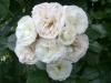 Bouquet-Parfait®, Lens, 1989